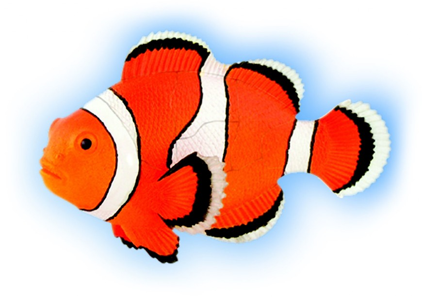 FP021 Clown Fish - Quay Imports Ltd